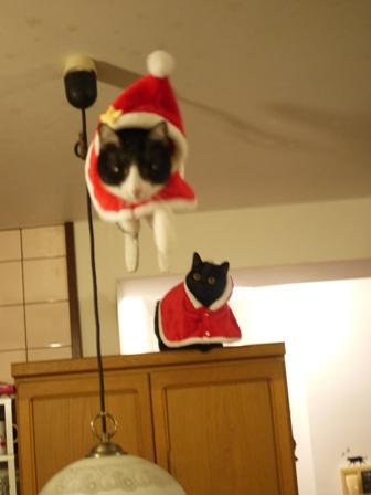 空飛ぶクリスマス猫 てぃぁらみるきぃ編。_a0143140_1323750.jpg