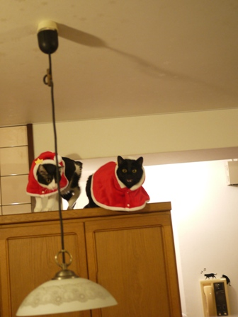空飛ぶクリスマス猫 てぃぁらみるきぃ編。_a0143140_1333579.jpg