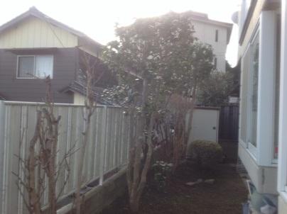 庭木剪定_c0186441_20364016.jpg