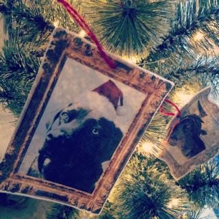 メリークリスマスゴマ_d0190041_15494467.jpg