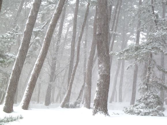 「冬 景」_f0150893_18194770.jpg