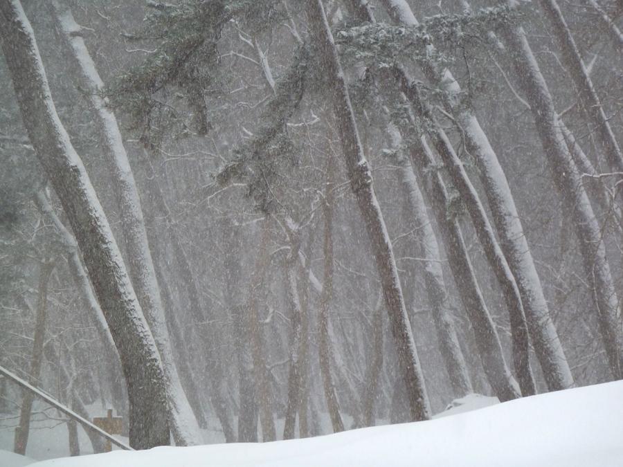 「冬 景」_f0150893_18264761.jpg