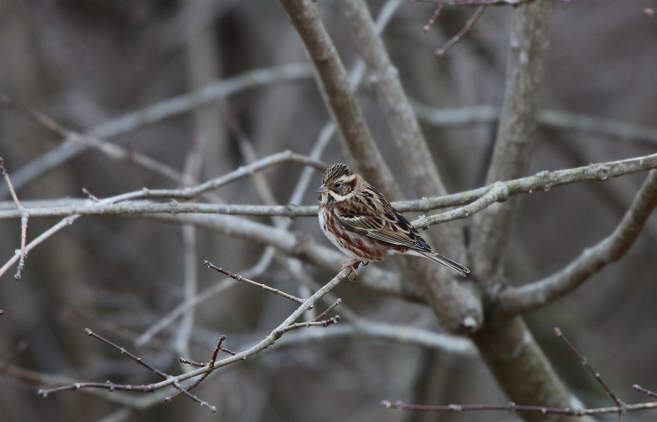 T山の野鳥_f0296999_18382587.jpg