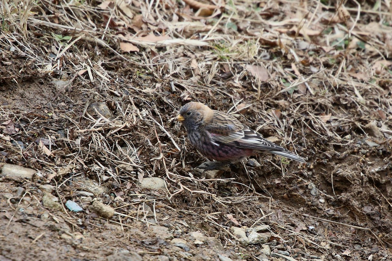 T山の野鳥_f0296999_18441277.jpg