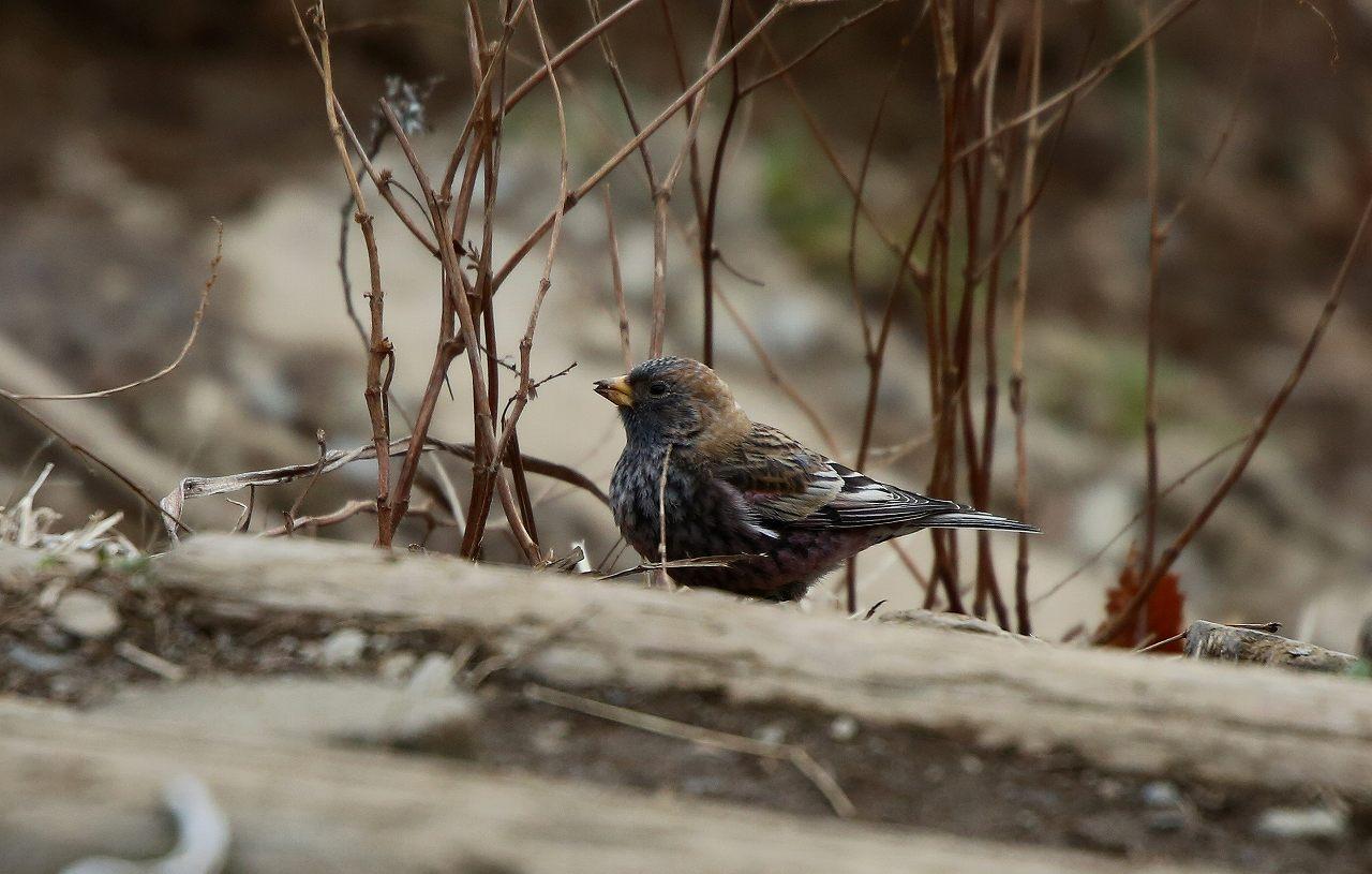 T山の野鳥_f0296999_1844733.jpg