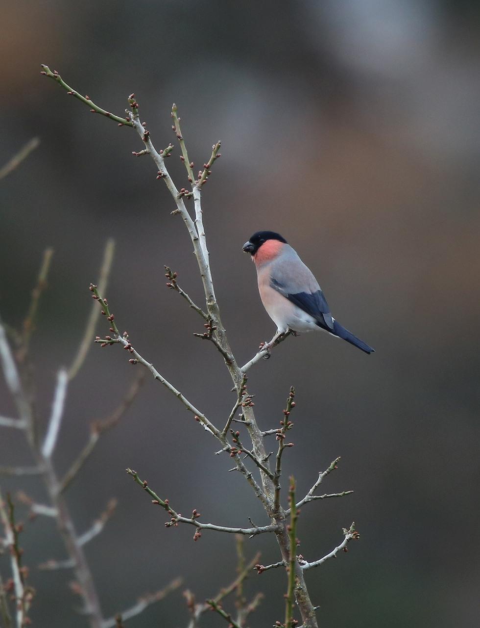 T山の野鳥_f0296999_18472288.jpg