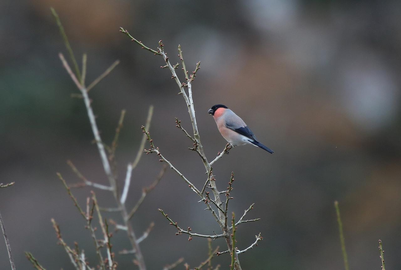 T山の野鳥_f0296999_18473376.jpg