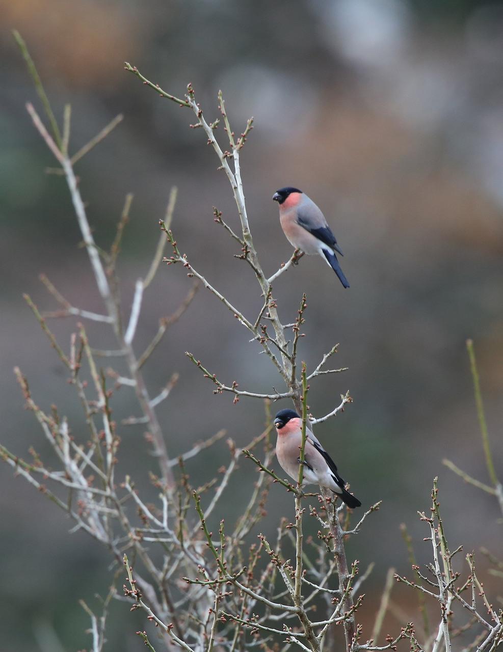 T山の野鳥_f0296999_18473918.jpg