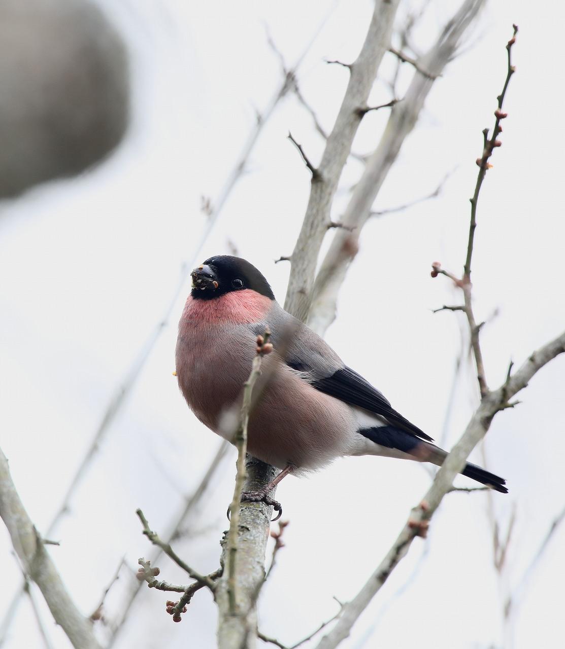 T山の野鳥_f0296999_18482528.jpg