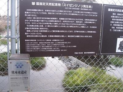 ☆上江津湖 文学の散歩道☆_b0228113_15014413.jpg