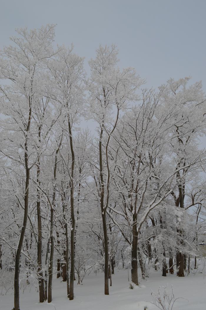 北の森からエゾリス便り _d0098721_213176.jpg