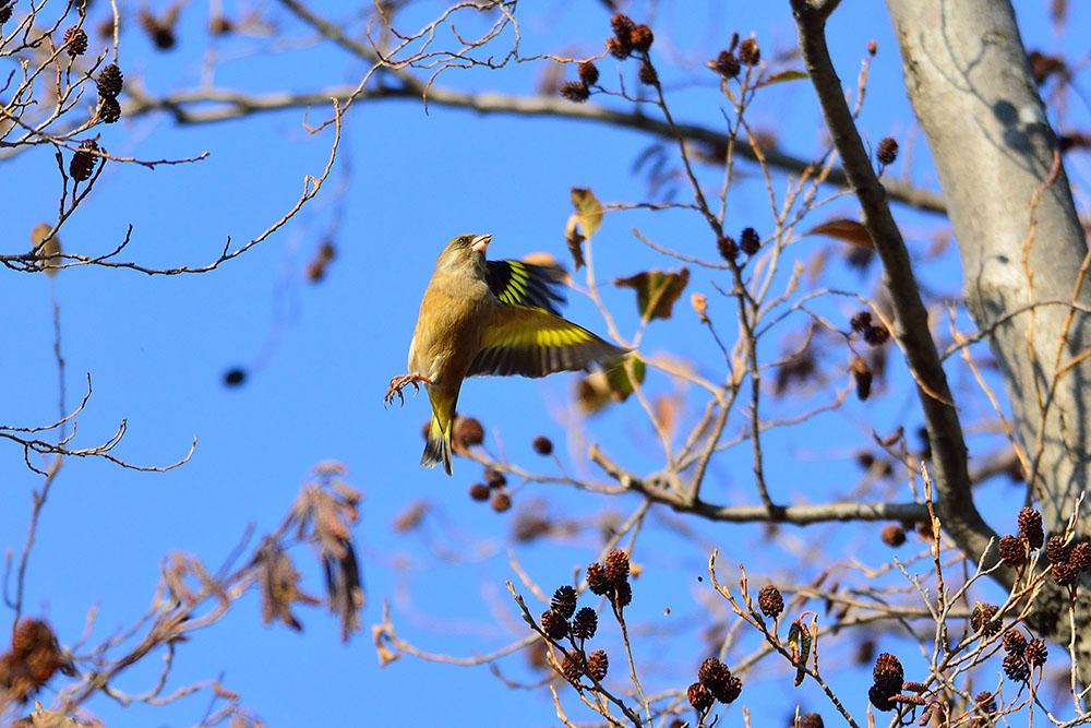 葛飾区 M公園 ~ 市川方面 冬鳥の観察_f0324026_1642247.jpg