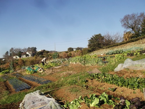 最後の楽園...ではなく菜園です・_b0137932_02482.jpg