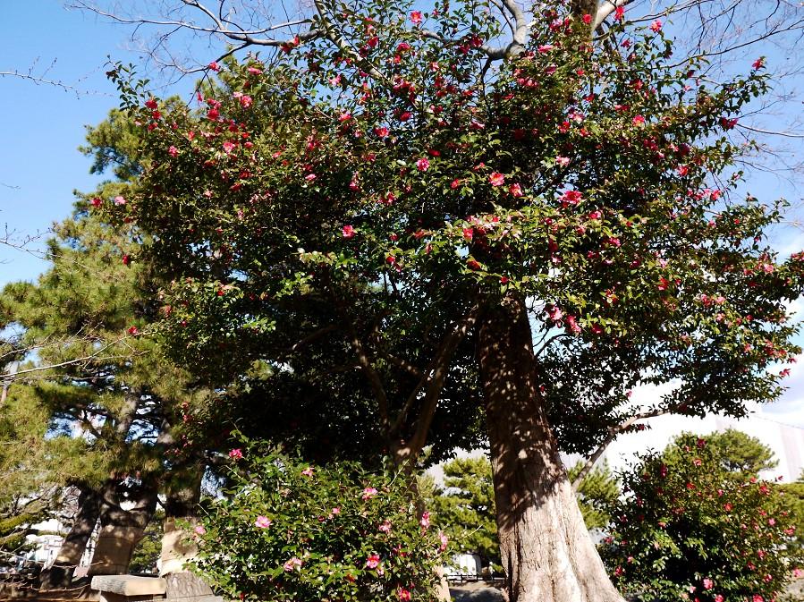 和歌山城公園にて_b0093754_2034271.jpg