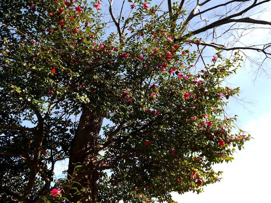 和歌山城公園にて_b0093754_20344079.jpg