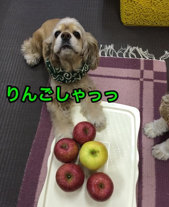 b0067012_20174914.jpg