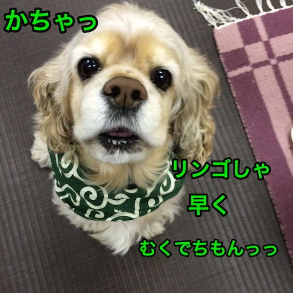 b0067012_20202682.jpg