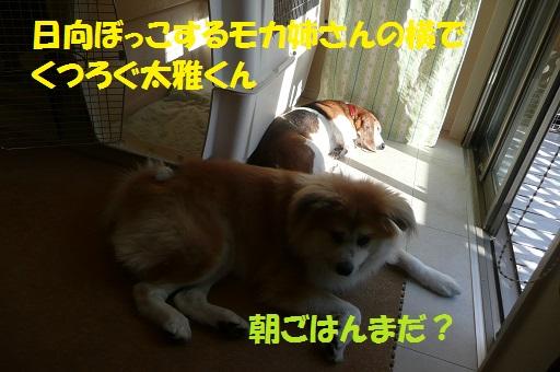 f0121712_892691.jpg