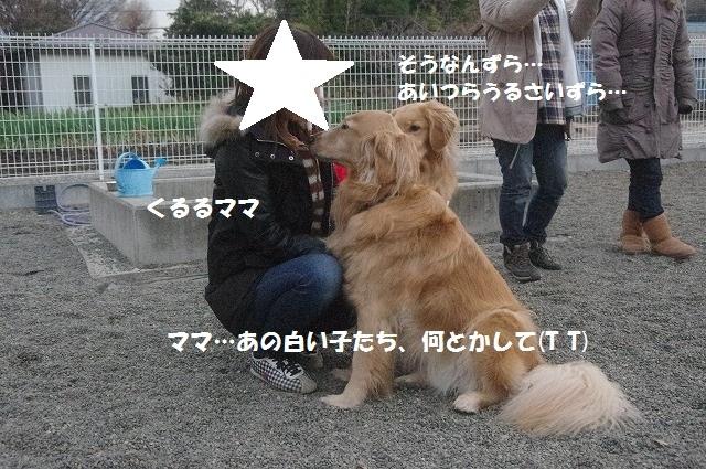 a0323521_21330210.jpg