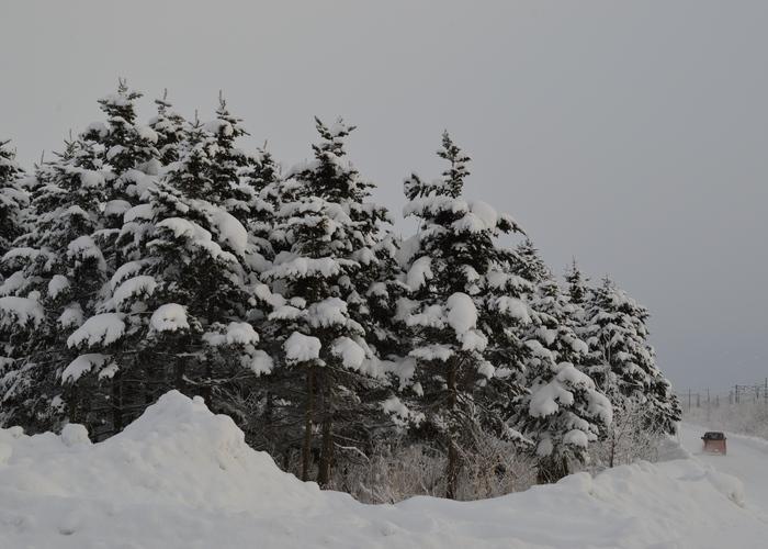 北の森からエゾリス便り _d0098721_20212513.jpg