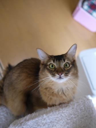 猫のお友だち ブブくん編。_a0143140_21181525.jpg