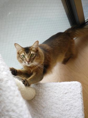 猫のお友だち ブブくん編。_a0143140_21183758.jpg