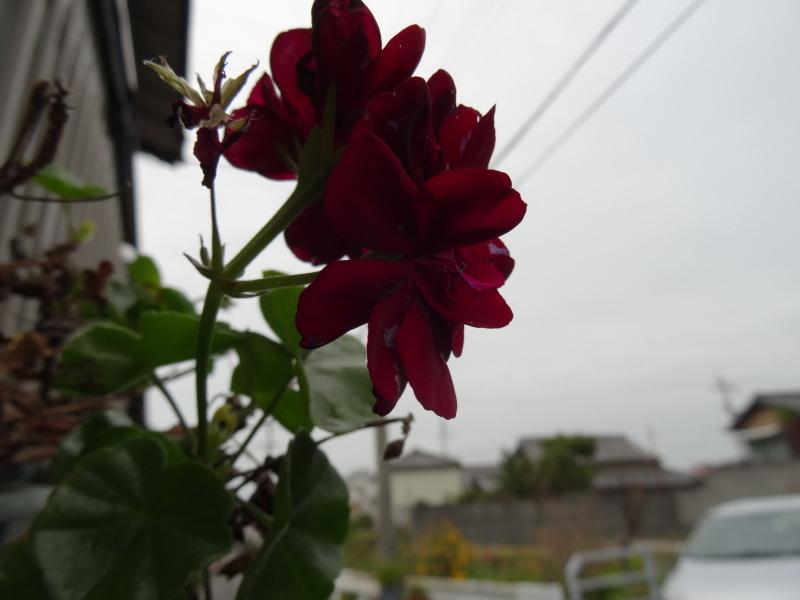 買い物のハシゴに同行     by     (TATE-misaki)_c0108460_20442260.jpg