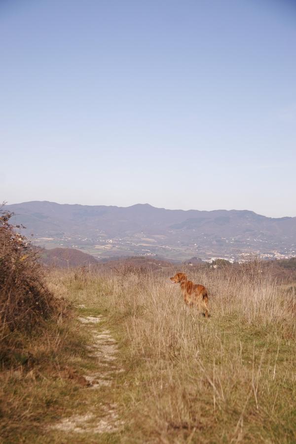 ラーラと山のお散歩_f0106597_1352677.jpg