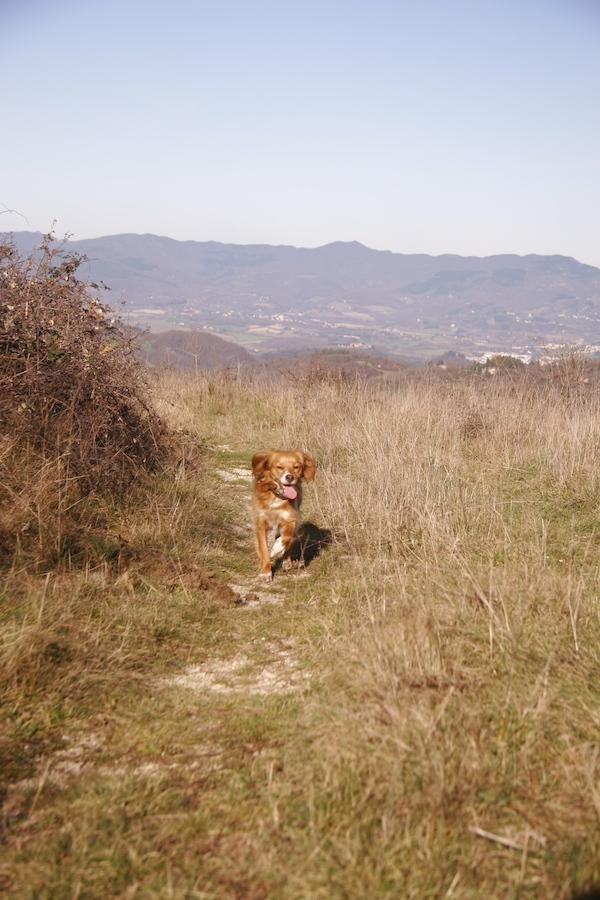ラーラと山のお散歩_f0106597_14808.jpg