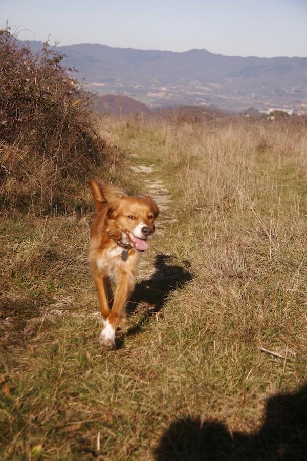 ラーラと山のお散歩_f0106597_1494374.jpg