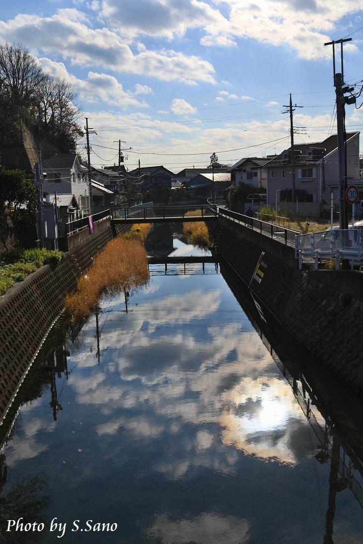侍従川のクリーンアップ&調査(12月)_b0348205_14410396.jpg