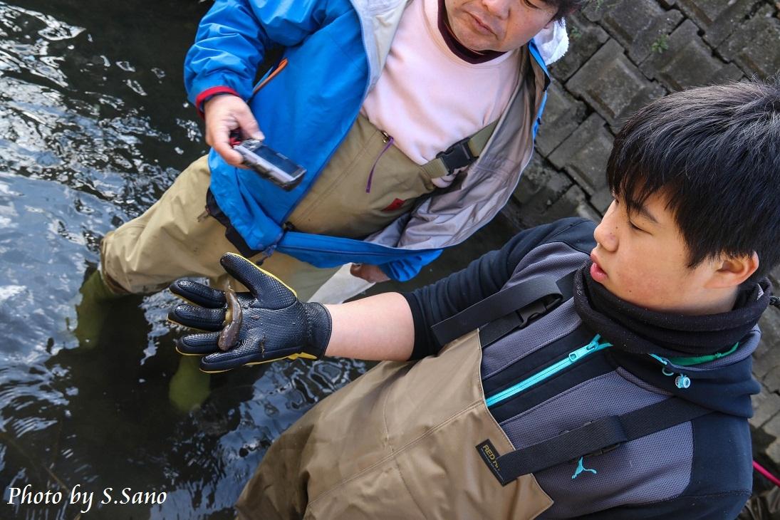 侍従川のクリーンアップ&調査(12月)_b0348205_14422141.jpg