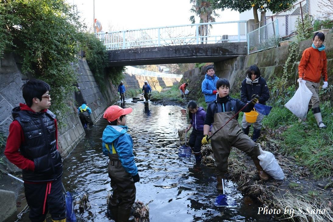 侍従川のクリーンアップ&調査(12月)_b0348205_14471765.jpg