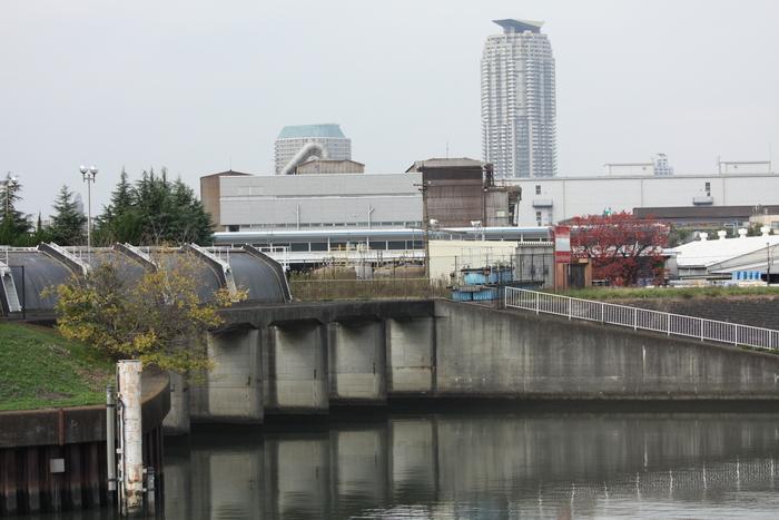 新芝川と荒川沿いの散歩・・・。_a0214329_0324661.jpg