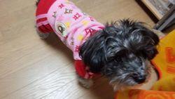 犬の服_d0228130_7372755.jpg