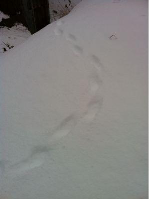 雪_a0197647_1415991.jpg