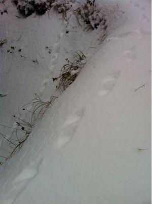 雪_a0197647_142087.jpg
