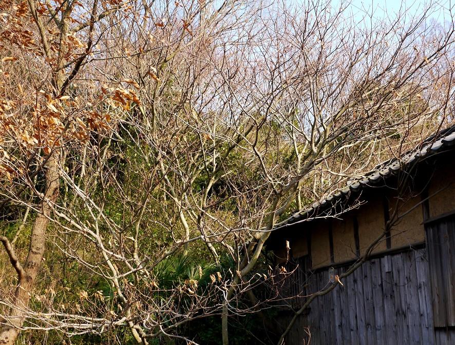 里山の風景_b0093754_20111119.jpg