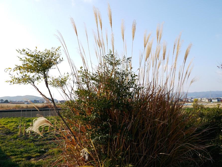 里山の風景_b0093754_2012736.jpg