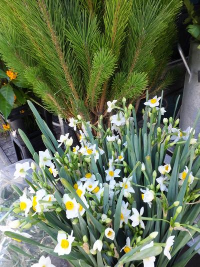 オークリーフ(お正月の花)_f0049672_11334777.jpg
