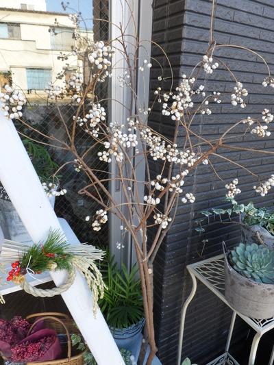 オークリーフ(お正月の花)_f0049672_11341917.jpg