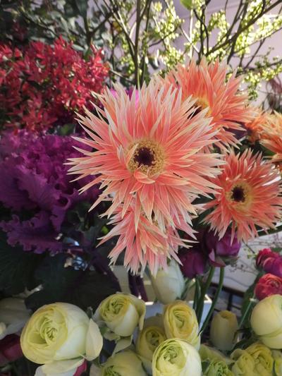 オークリーフ(お正月の花)_f0049672_1147521.jpg