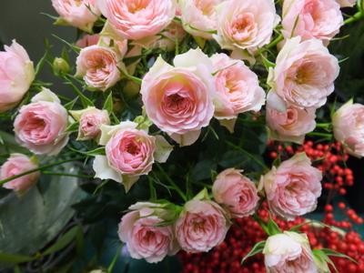 オークリーフ(お正月の花)_f0049672_11483243.jpg