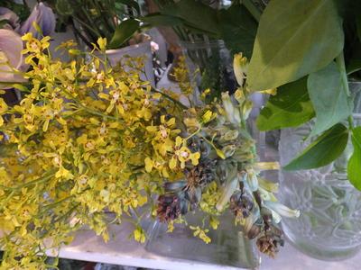 オークリーフ(お正月の花)_f0049672_1148670.jpg