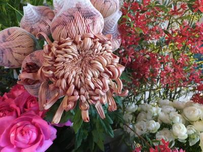 オークリーフ(お正月の花)_f0049672_11523492.jpg