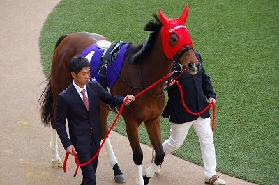 歴史的名牝が魅せた底力!有馬記念は、ジェンティルドンナが見事引退の花道を飾る!_b0015386_054996.jpg