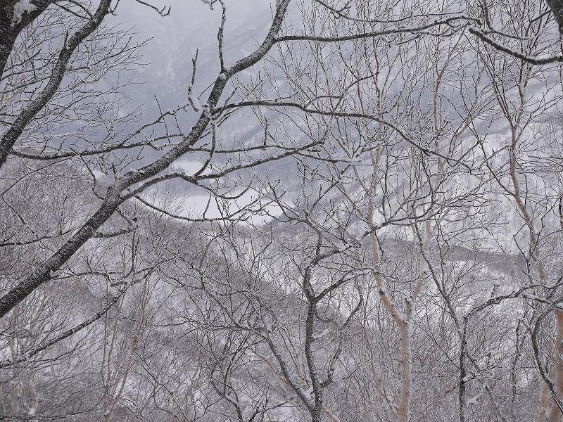 恵庭岳、12月28日_f0138096_1333669.jpg