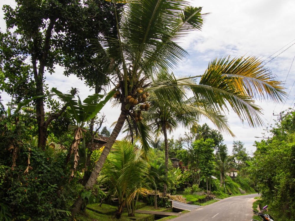 2014ジャワ島バリ島シンガポールvol.9~ウブド楽園の散歩道(バリ島2)~_f0276498_00044970.jpg