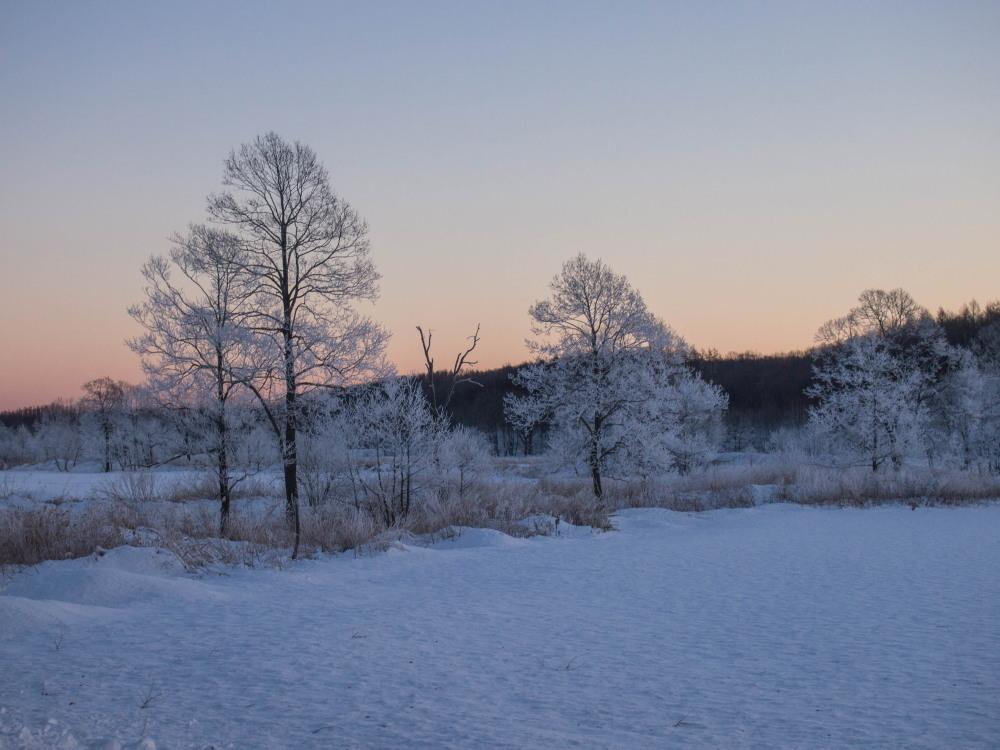 今年もあと3日・・「霧氷ツアー」が先日から始まっています。_f0276498_11080435.jpg