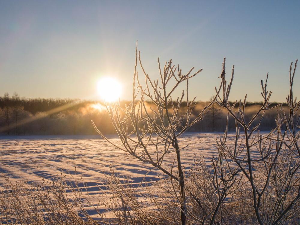今年もあと3日・・「霧氷ツアー」が先日から始まっています。_f0276498_11084656.jpg